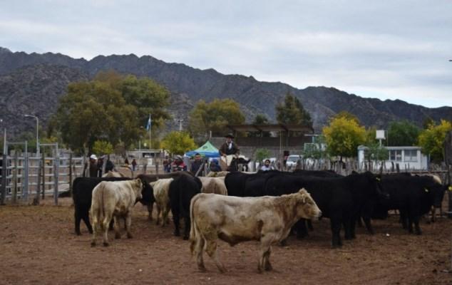 Productores ganaderos de Valle Fértil recibieron toros reproductores