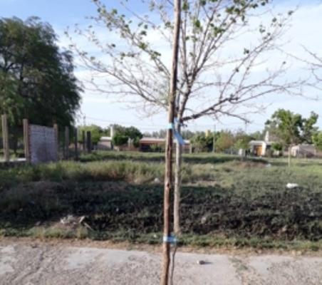 Plan forestal en Sarmiento