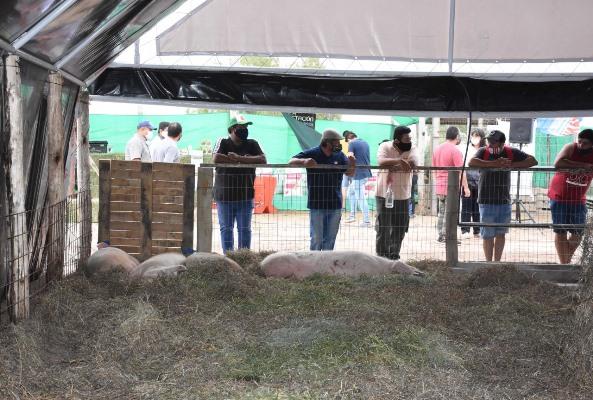 Proyecto porcino en Jáchal crece con el aporte de Minas Argentinas