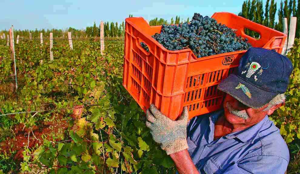 El Ministerio de Producción logró un consenso y fijó el precio de la uva a $20 el kilo
