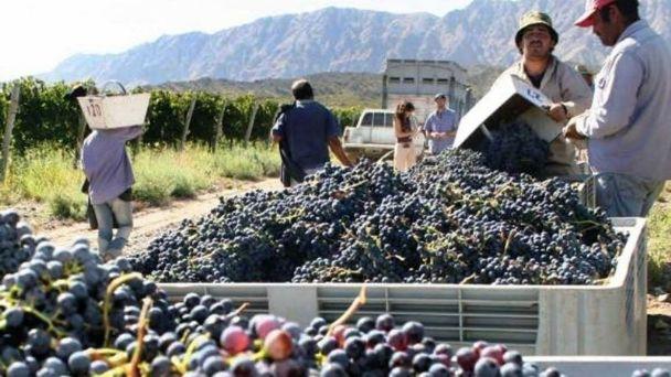 Después que se fijara el precio de la uva, el sector bodeguero desmintió el consenso