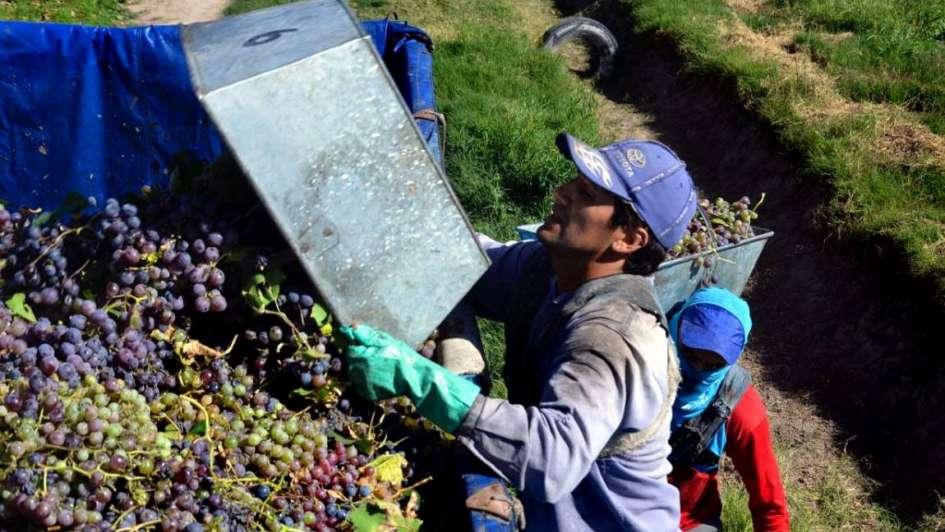 El Gobierno de Mendoza pone piso al precio de las uvas criollas y malbec