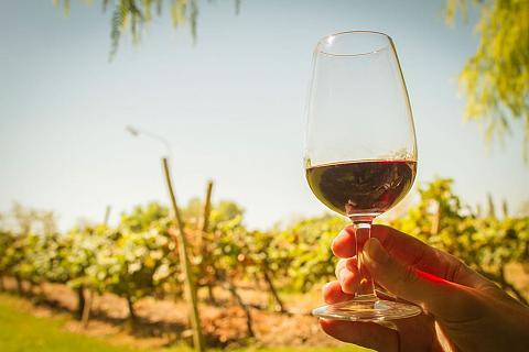 La Municipalidad de Pocito le pone música a las rutas del Vino y del Olivo