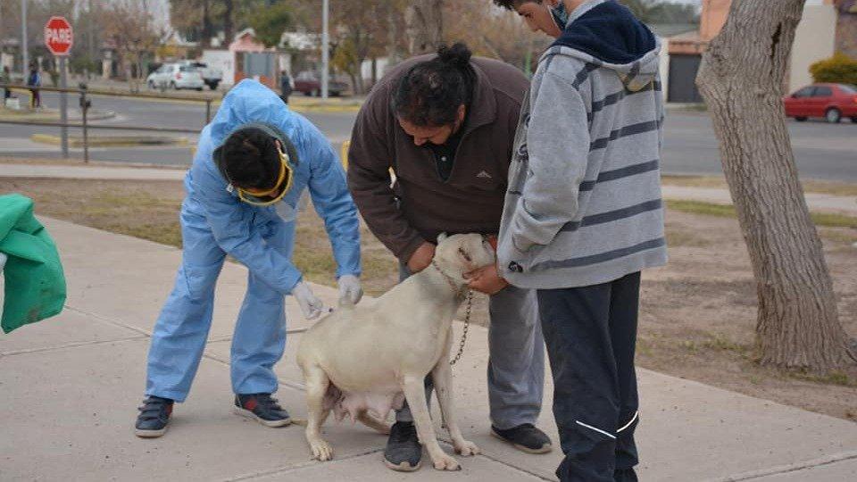 Más de mil mascotas ya fueron vacunadas contra la rabia en el departamento