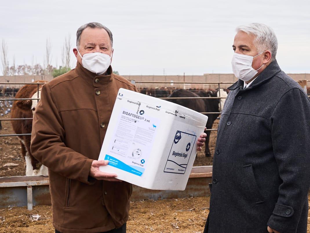 Pocito recibió más de mil vacunas contra la aftosa y la brucelosis bovina