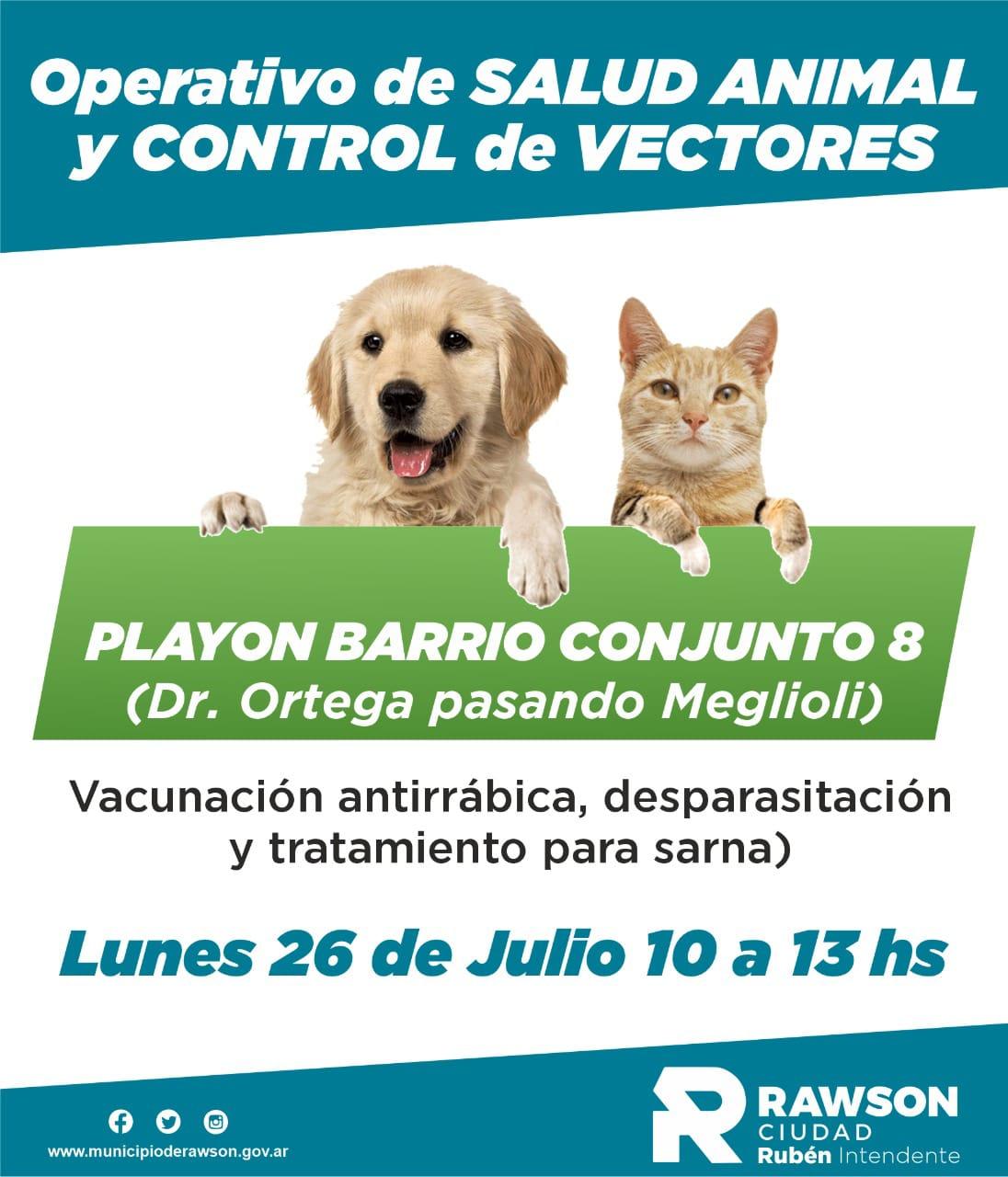 Operativo de salud animal en Rawson