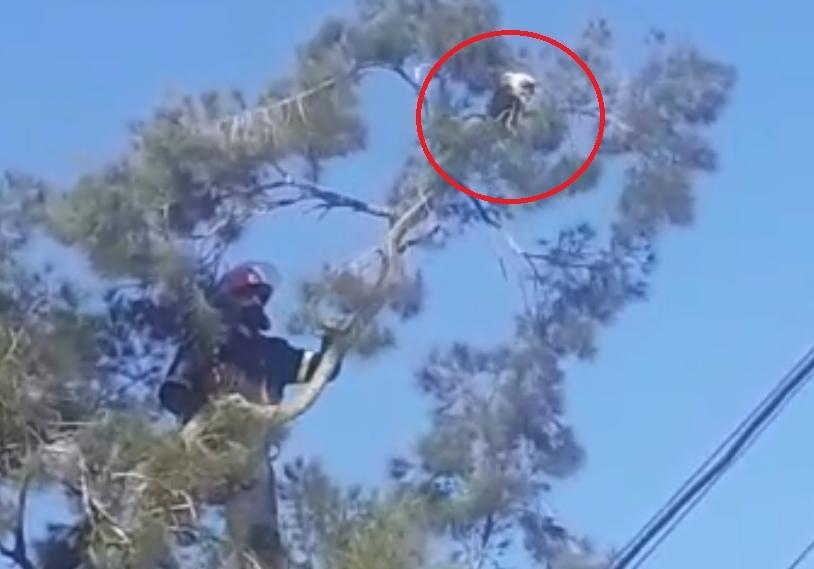 Heróico rescate de Miky en Rawson: mirá el video en esta nota