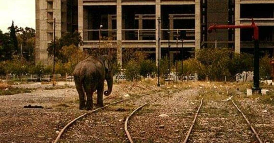 La historia detrás de la increíble foto del elefante frente al Centro Cívico